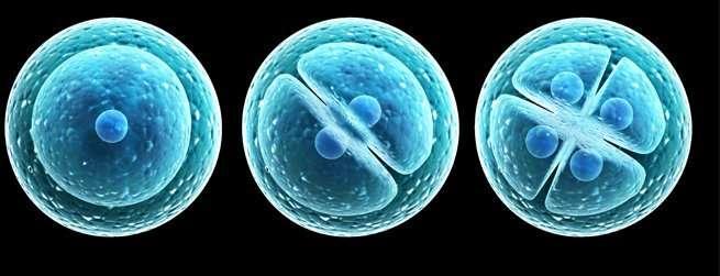 Qué es el embryoglue