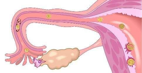 sintomas-implantacion-embrionaria